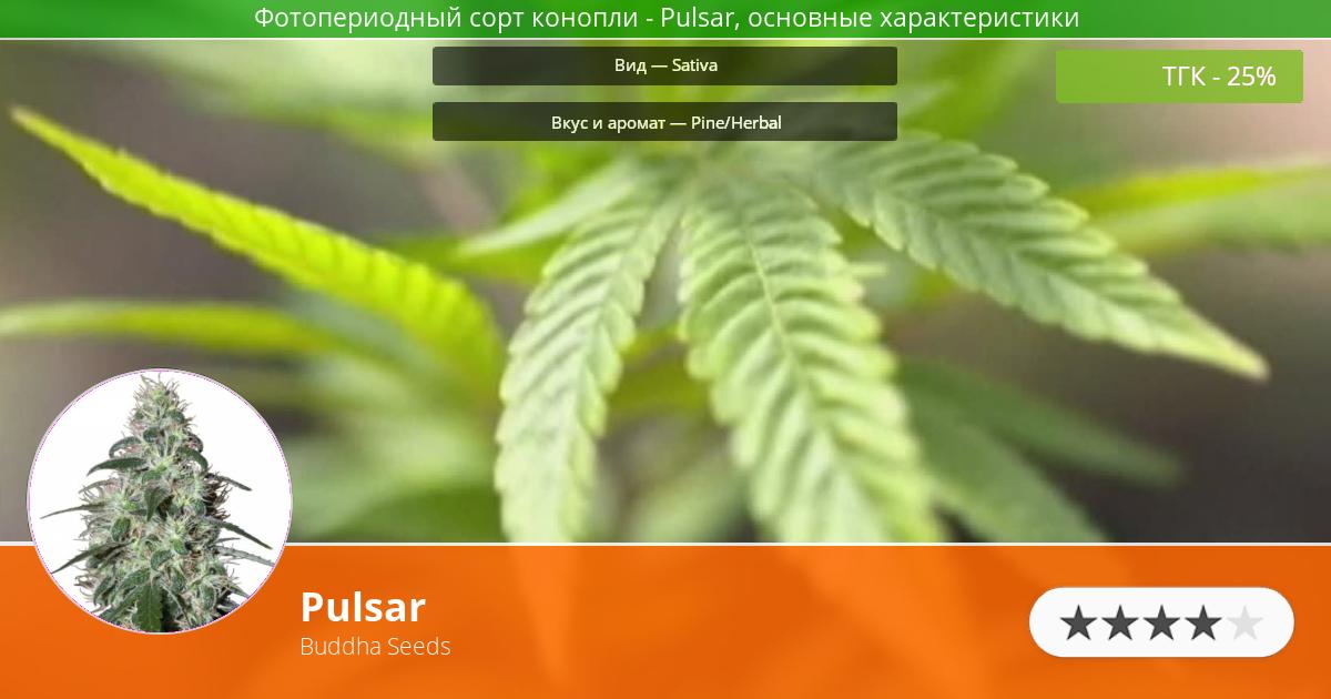 Инфограмма сорта марихуаны Pulsar