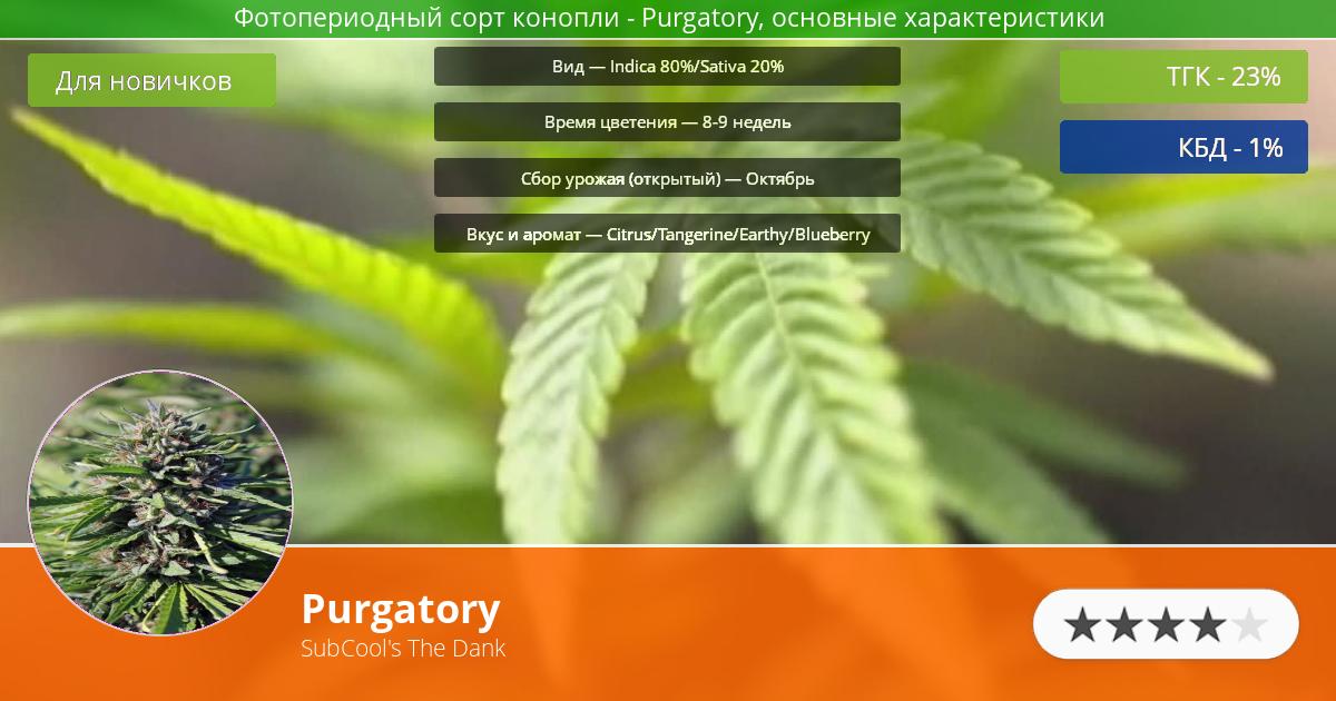 Инфограмма сорта марихуаны Purgatory