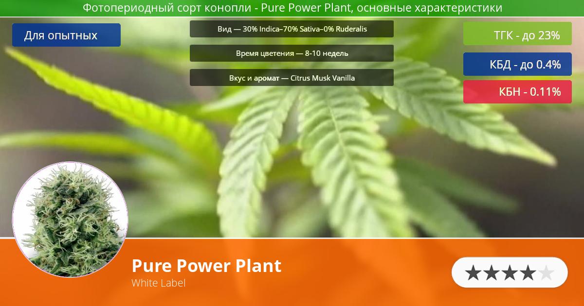 Инфограмма сорта марихуаны Pure Power Plant