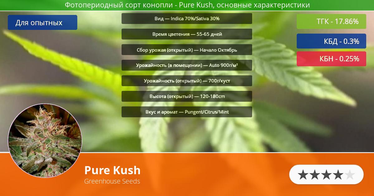 Инфограмма сорта марихуаны Pure Kush