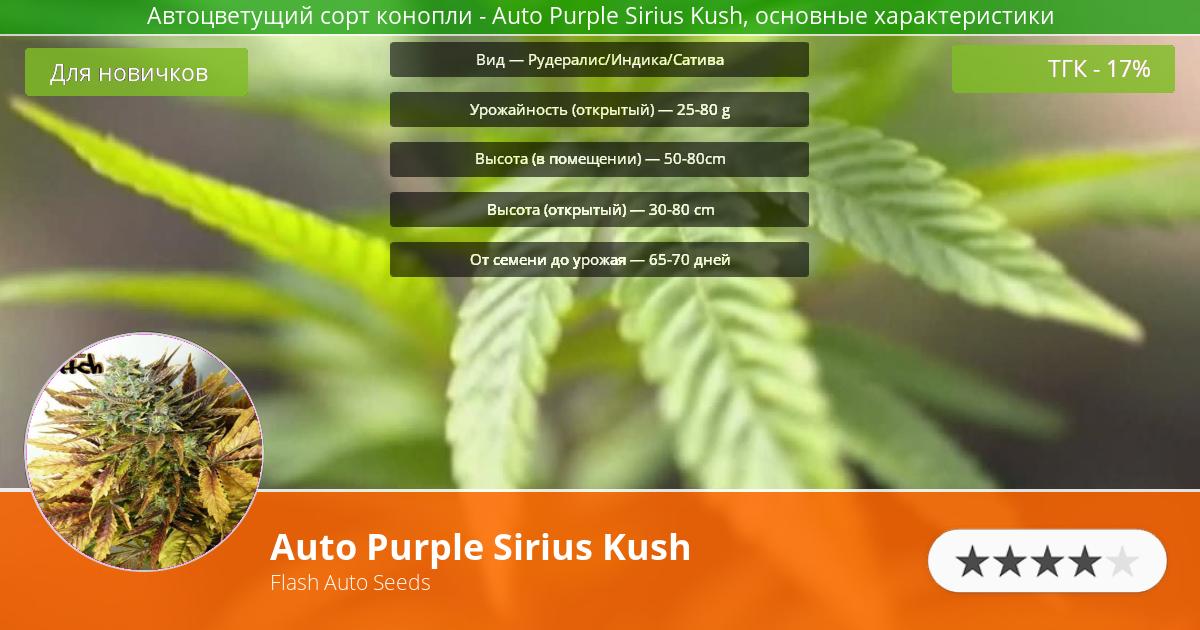 Инфограмма сорта марихуаны Auto Purple Sirius Kush