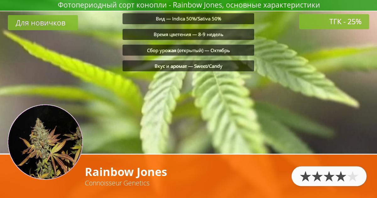 Инфограмма сорта марихуаны Rainbow Jones