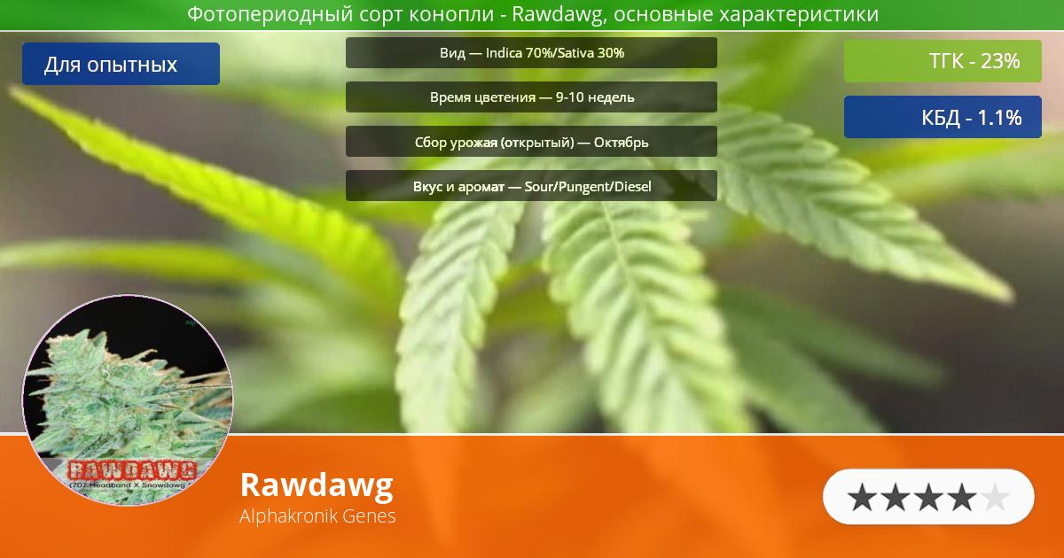 Инфограмма сорта марихуаны Rawdawg