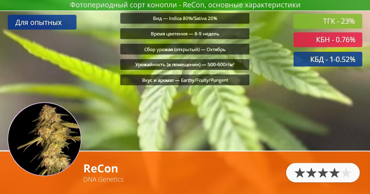 Инфограмма сорта марихуаны ReCon