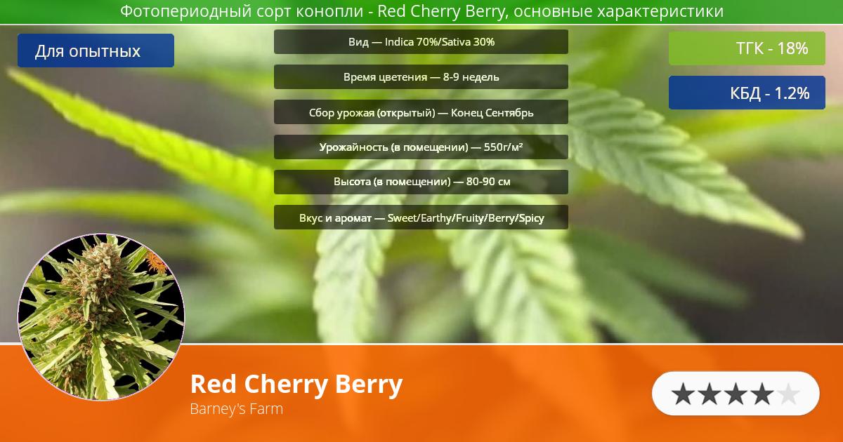 Инфограмма сорта марихуаны Red Cherry Berry