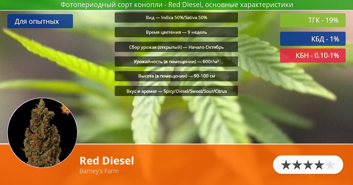 Инфограмма сорта марихуаны Red Diesel