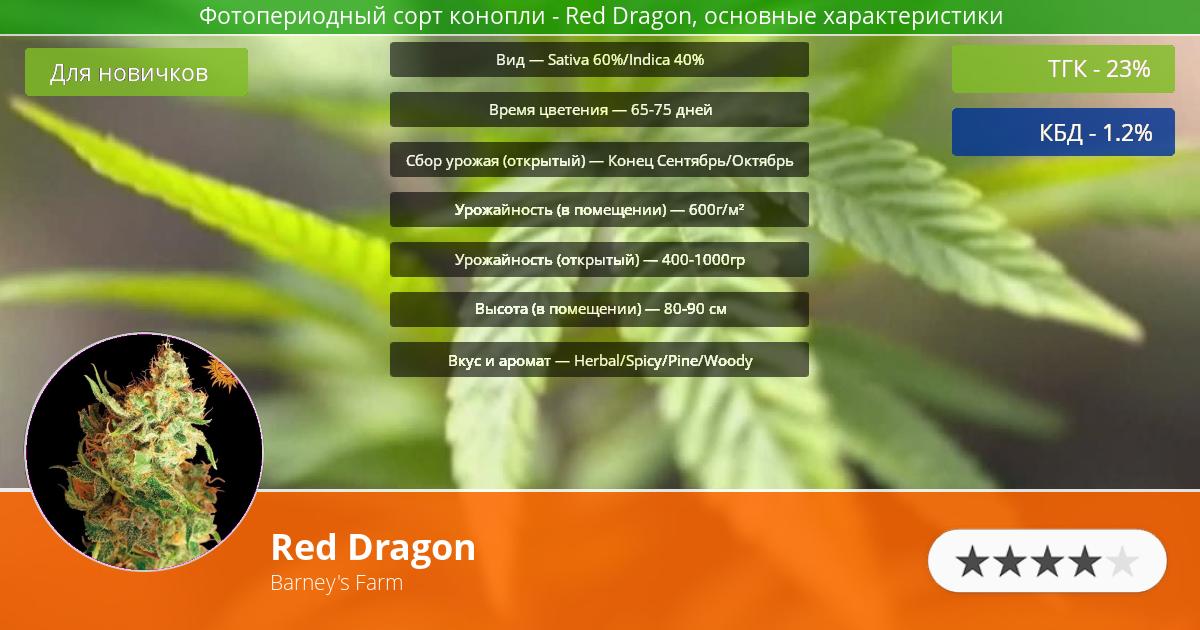 Инфограмма сорта марихуаны Red Dragon
