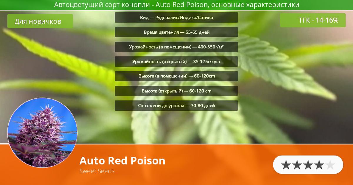 Инфограмма сорта марихуаны Auto Red Poison