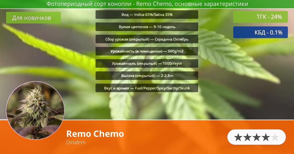 Инфограмма сорта марихуаны Remo Chemo