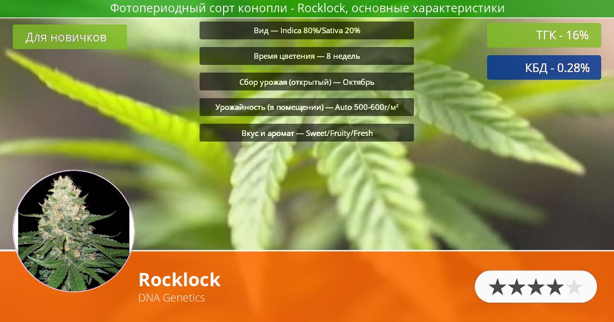 Инфограмма сорта марихуаны Rocklock