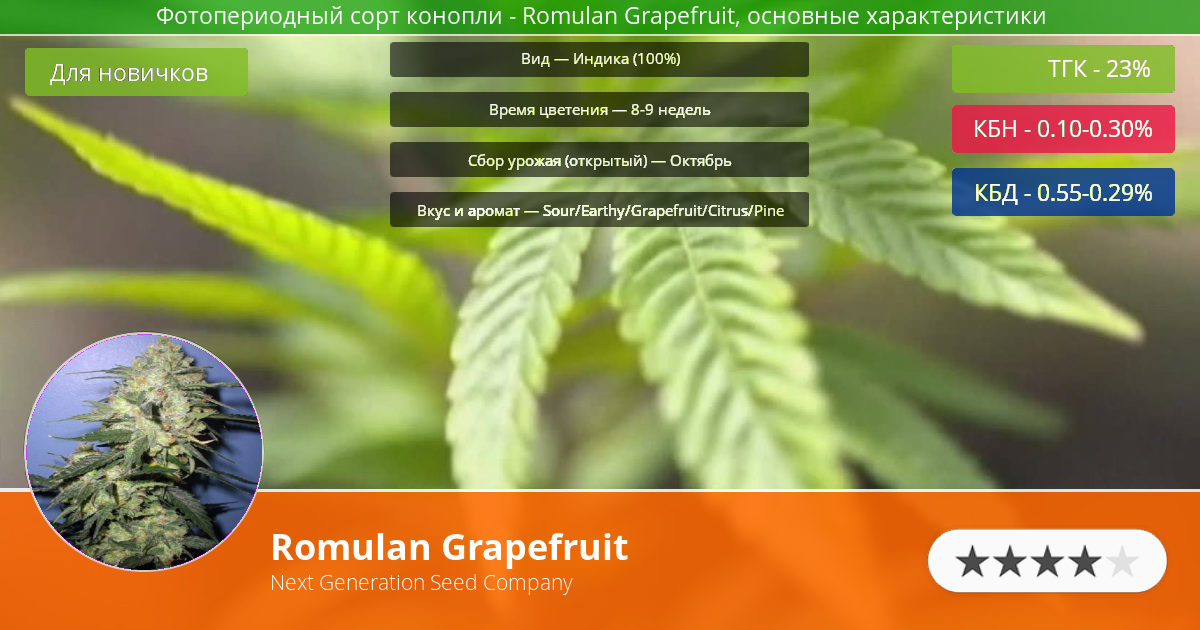 Инфограмма сорта марихуаны Romulan Grapefruit