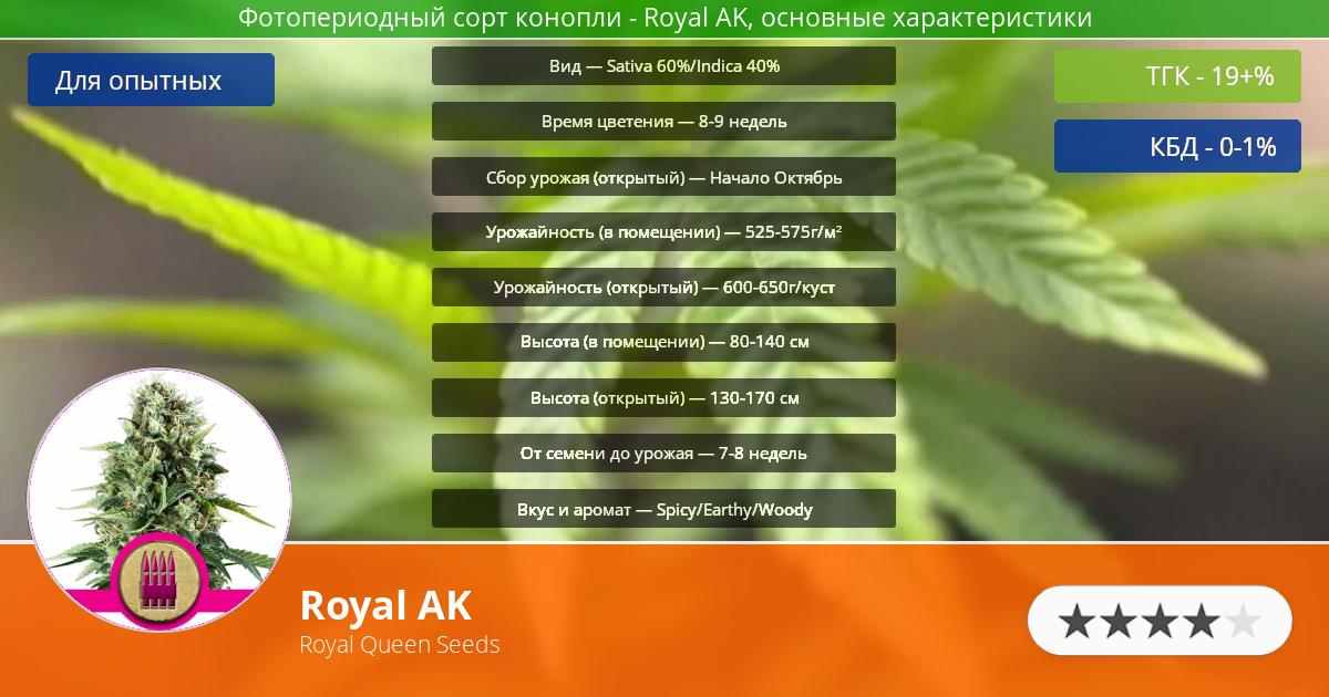 Инфограмма сорта марихуаны Royal AK
