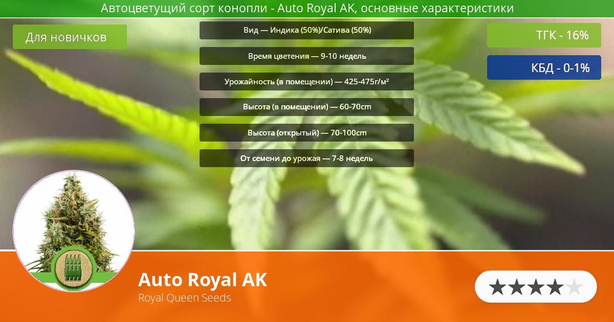 Инфограмма сорта марихуаны Auto Royal AK