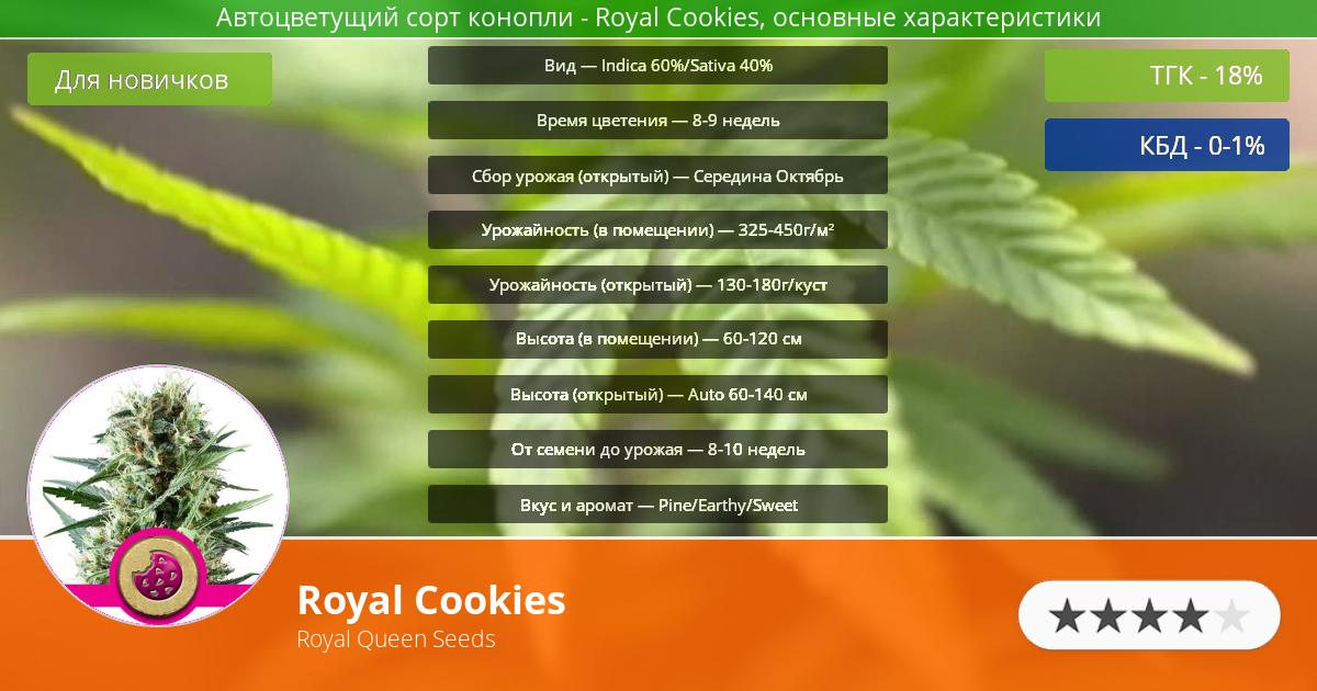 Инфограмма сорта марихуаны Royal Cookies