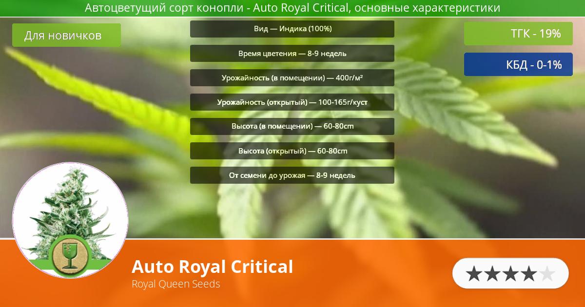 Инфограмма сорта марихуаны Auto Royal Critical