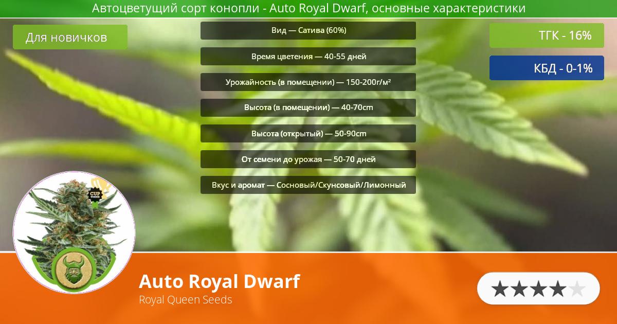 Инфограмма сорта марихуаны Auto Royal Dwarf