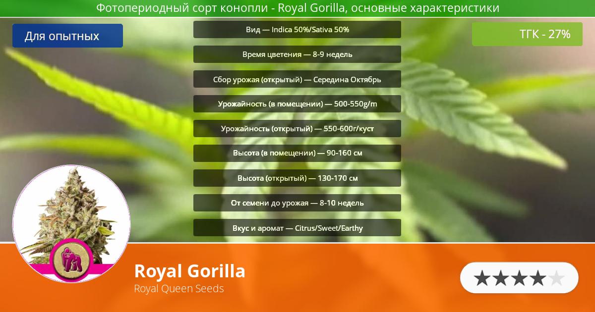 Инфограмма сорта марихуаны Royal Gorilla