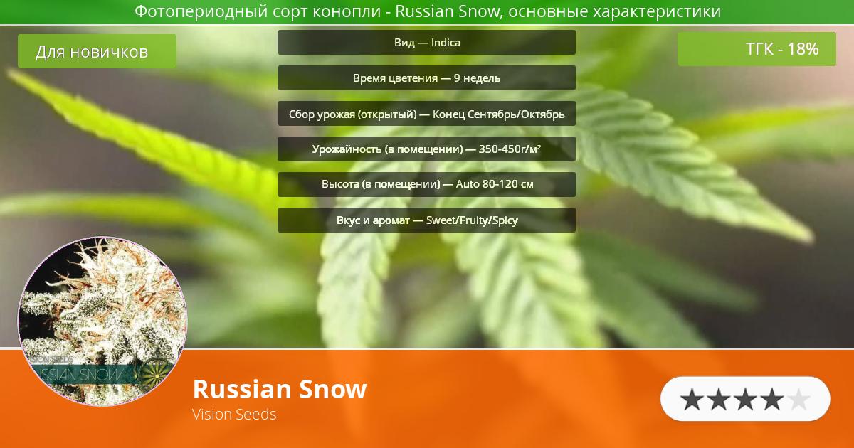 Инфограмма сорта марихуаны Russian Snow