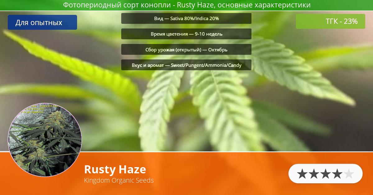 Инфограмма сорта марихуаны Rusty Haze