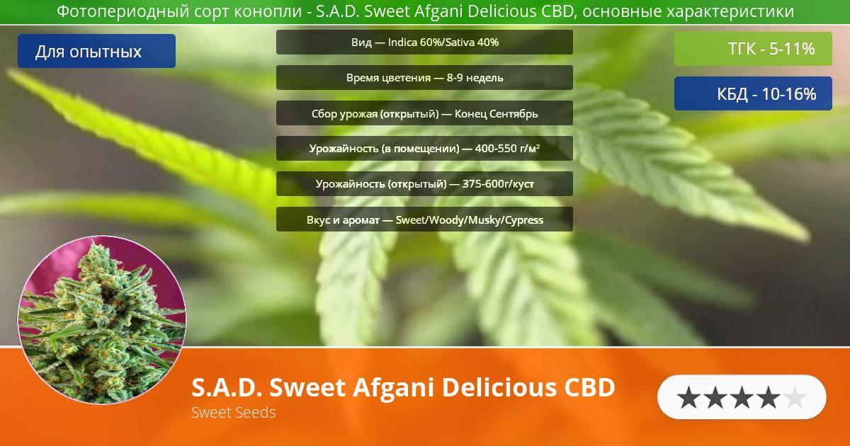Инфограмма сорта марихуаны S.A.D. Sweet Afgani Delicious CBD