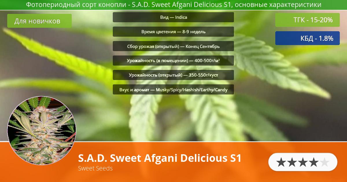 Инфограмма сорта марихуаны S.A.D. Sweet Afgani Delicious S1