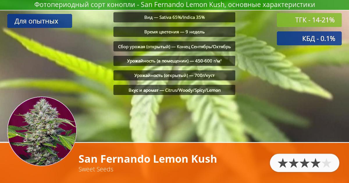 Инфограмма сорта марихуаны San Fernando Lemon Kush