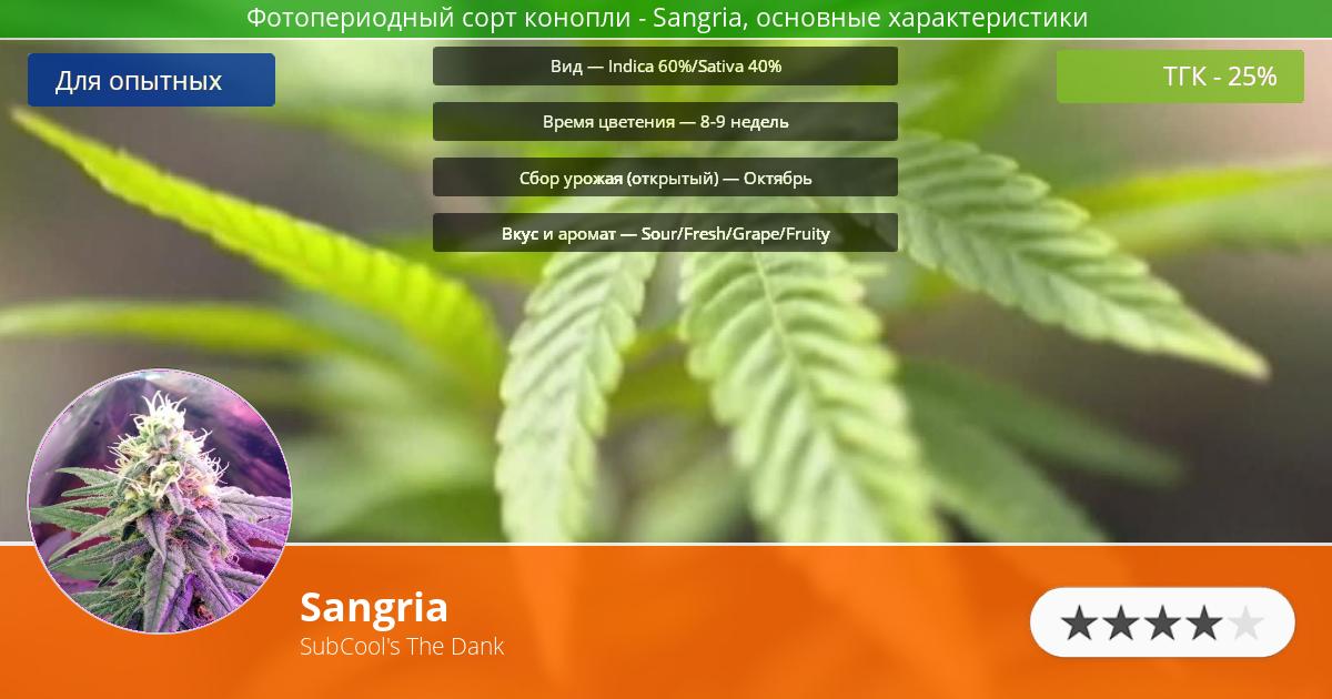 Инфограмма сорта марихуаны Sangria