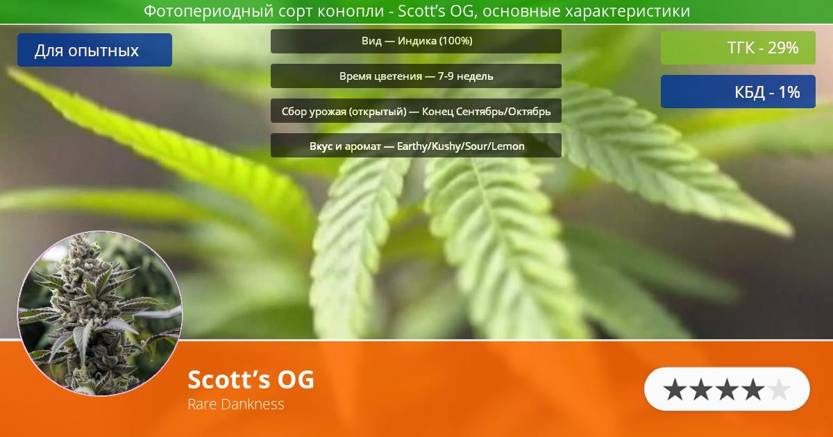 Инфограмма сорта марихуаны Scott's OG