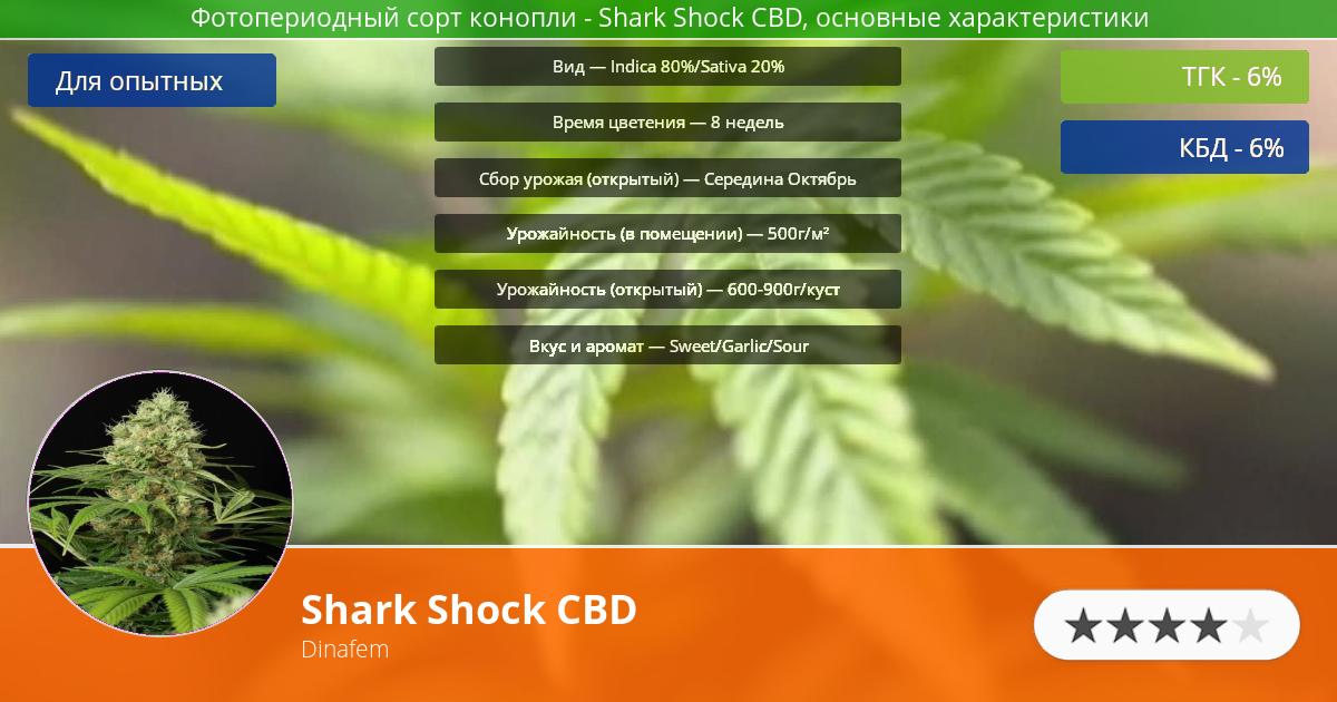 Инфограмма сорта марихуаны Shark Shock CBD