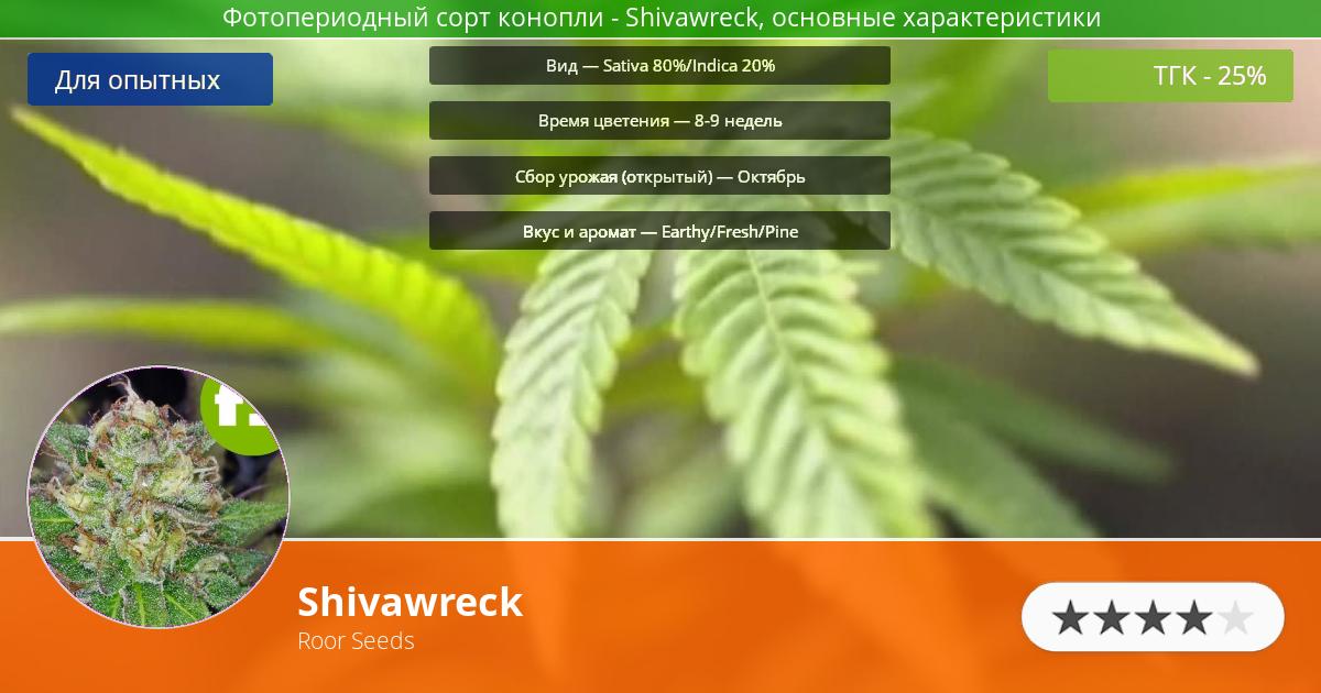 Инфограмма сорта марихуаны Shivawreck