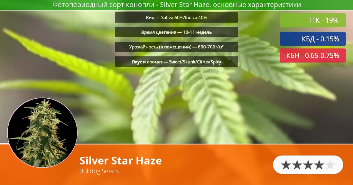 Инфограмма сорта марихуаны Silver Star Haze