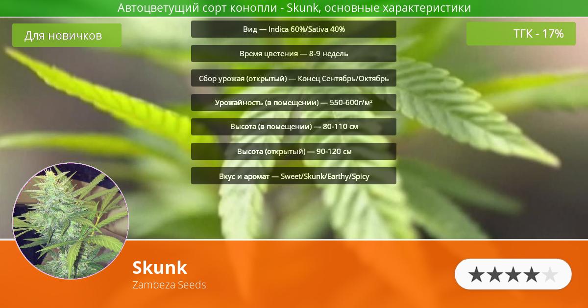 Инфограмма сорта марихуаны Skunk