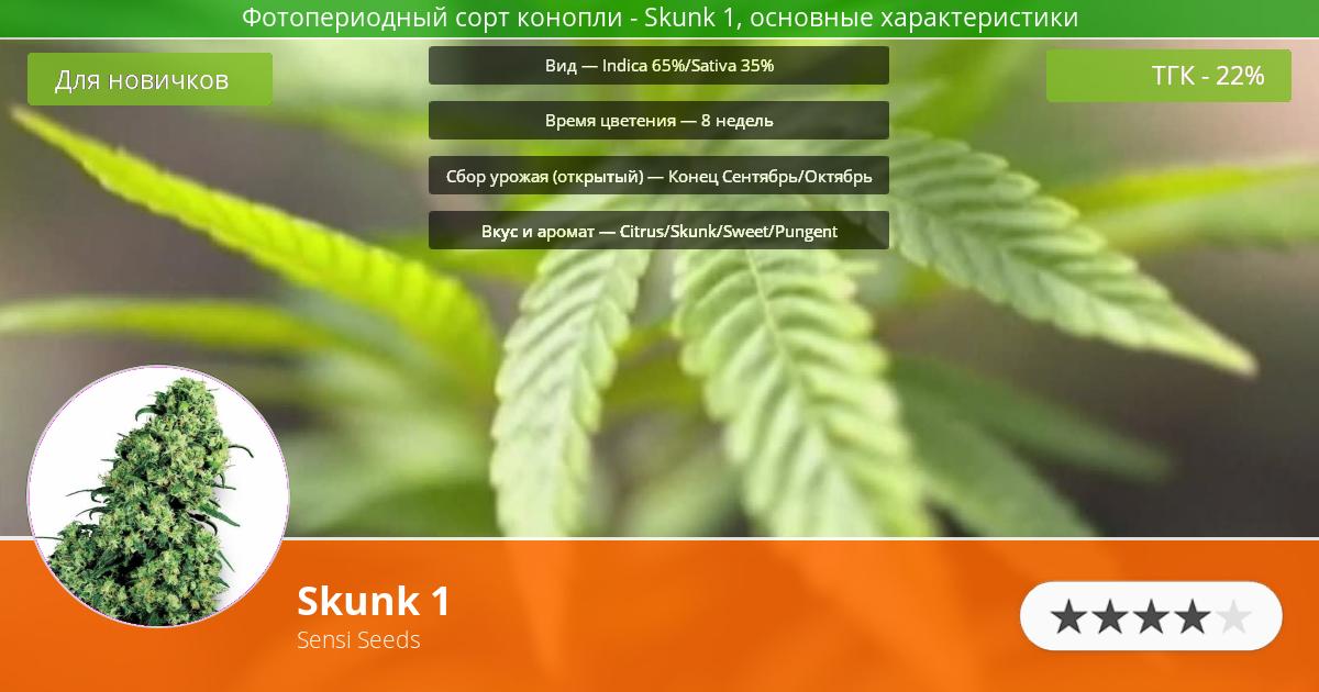 Инфограмма сорта марихуаны Skunk 1