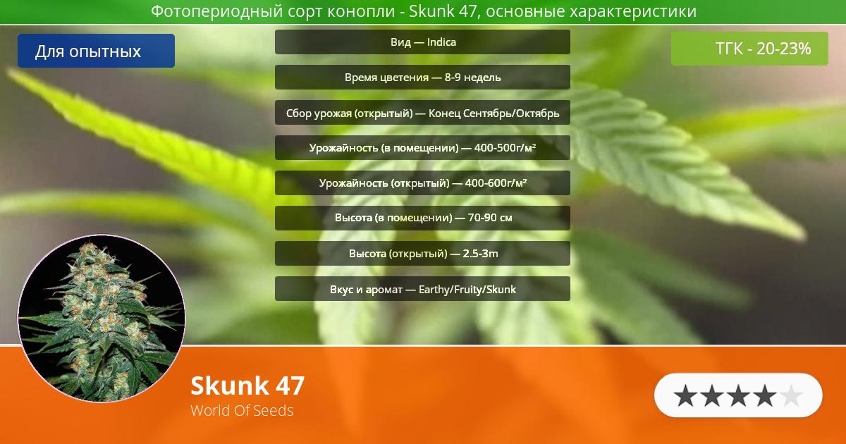 Инфограмма сорта марихуаны Skunk 47