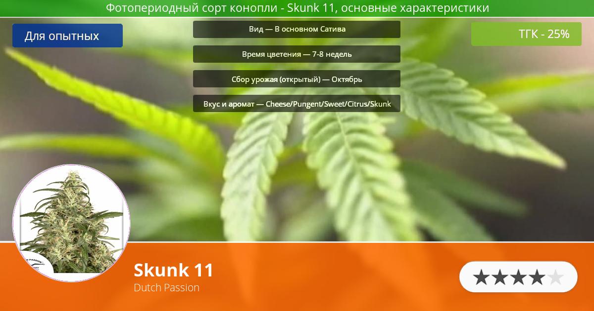 Инфограмма сорта марихуаны Skunk 11