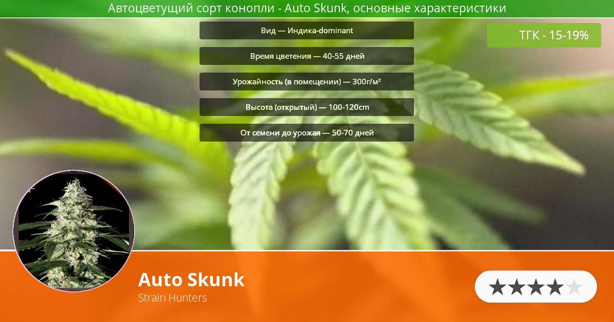 Инфограмма сорта марихуаны Auto Skunk