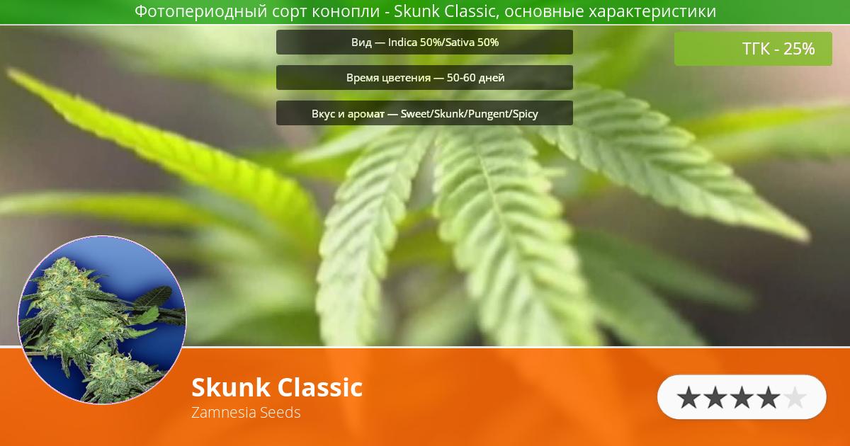 Инфограмма сорта марихуаны Skunk Classic