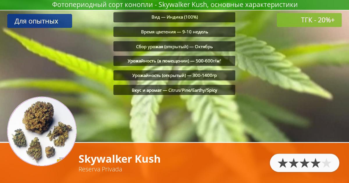 Инфограмма сорта марихуаны Skywalker Kush