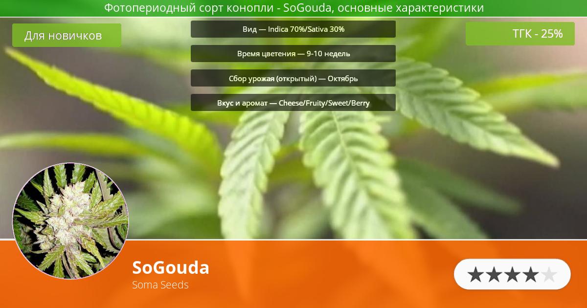 Инфограмма сорта марихуаны SoGouda