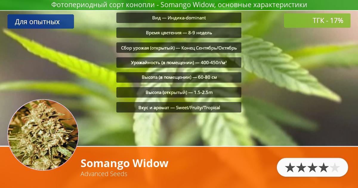 Инфограмма сорта марихуаны Somango Widow