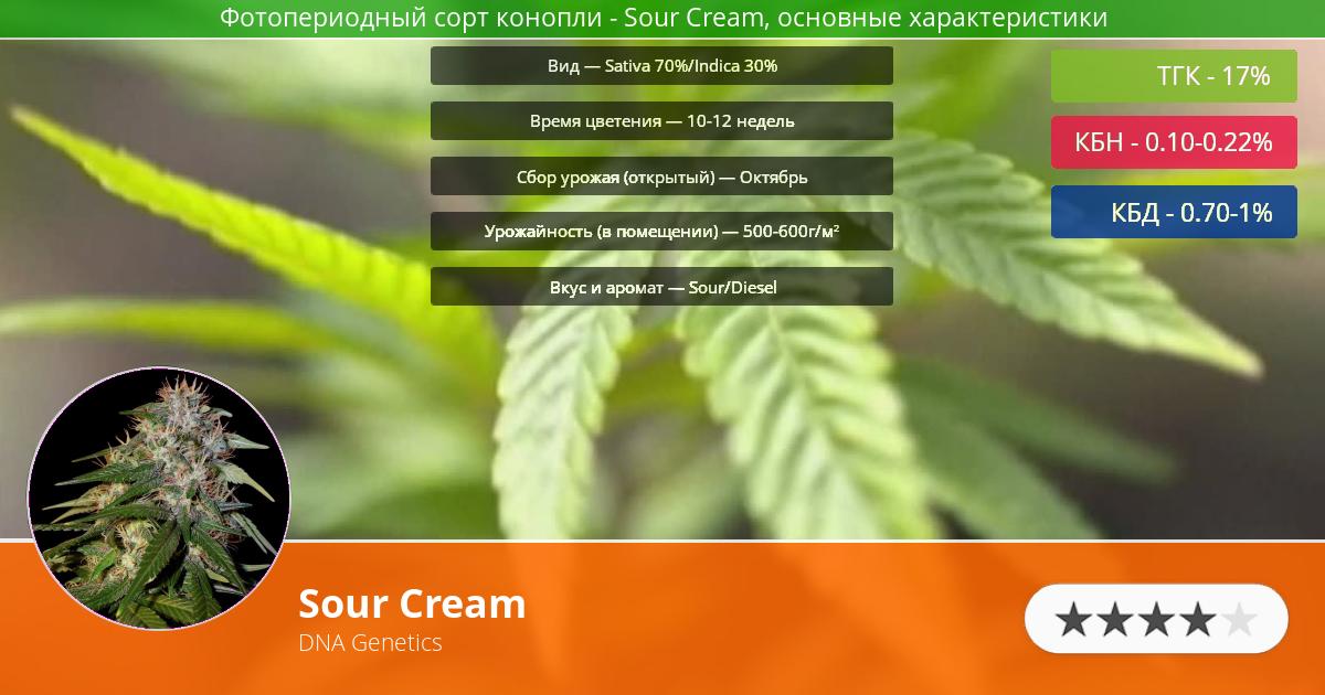 Инфограмма сорта марихуаны Sour Cream