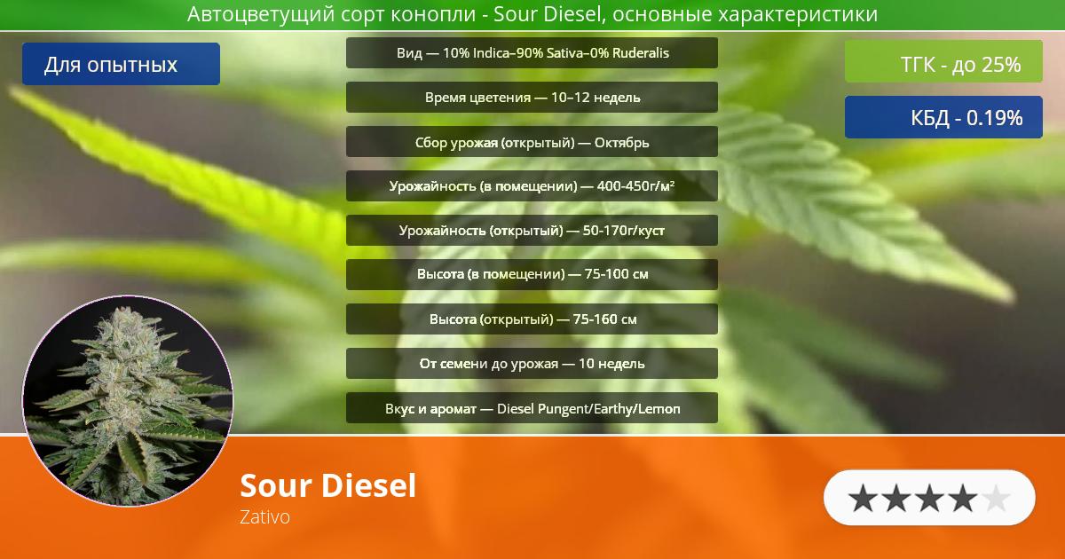 Инфограмма сорта марихуаны Sour Diesel