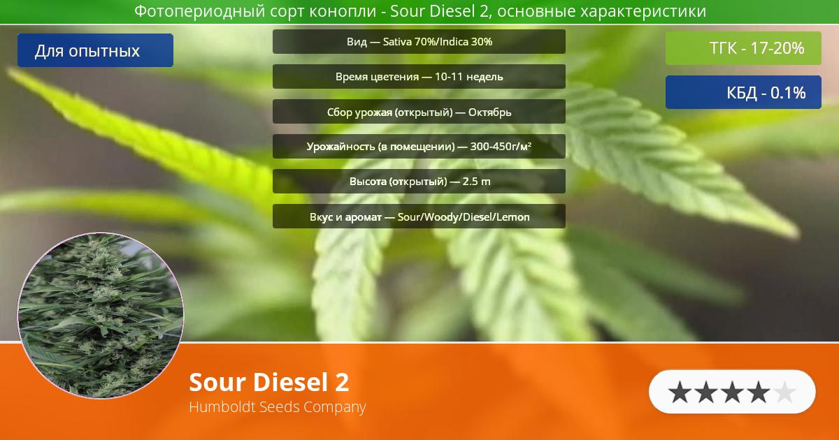 Инфограмма сорта марихуаны Sour Diesel 2