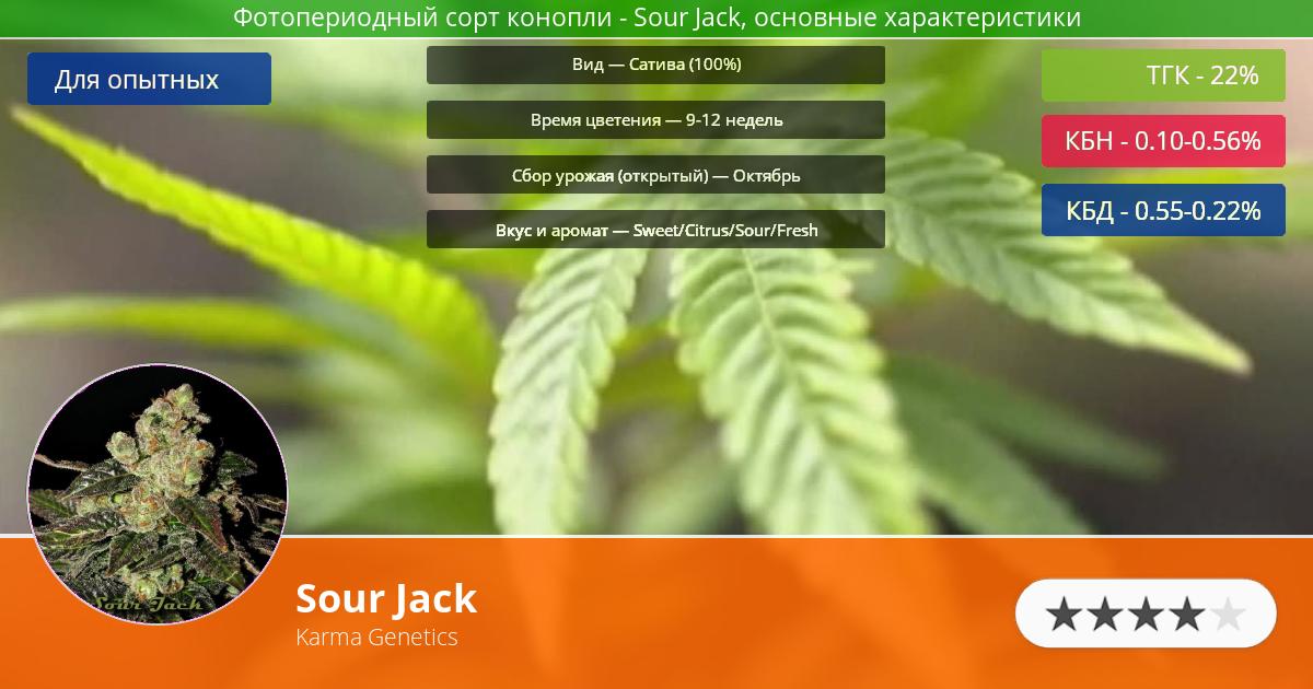 Инфограмма сорта марихуаны Sour Jack