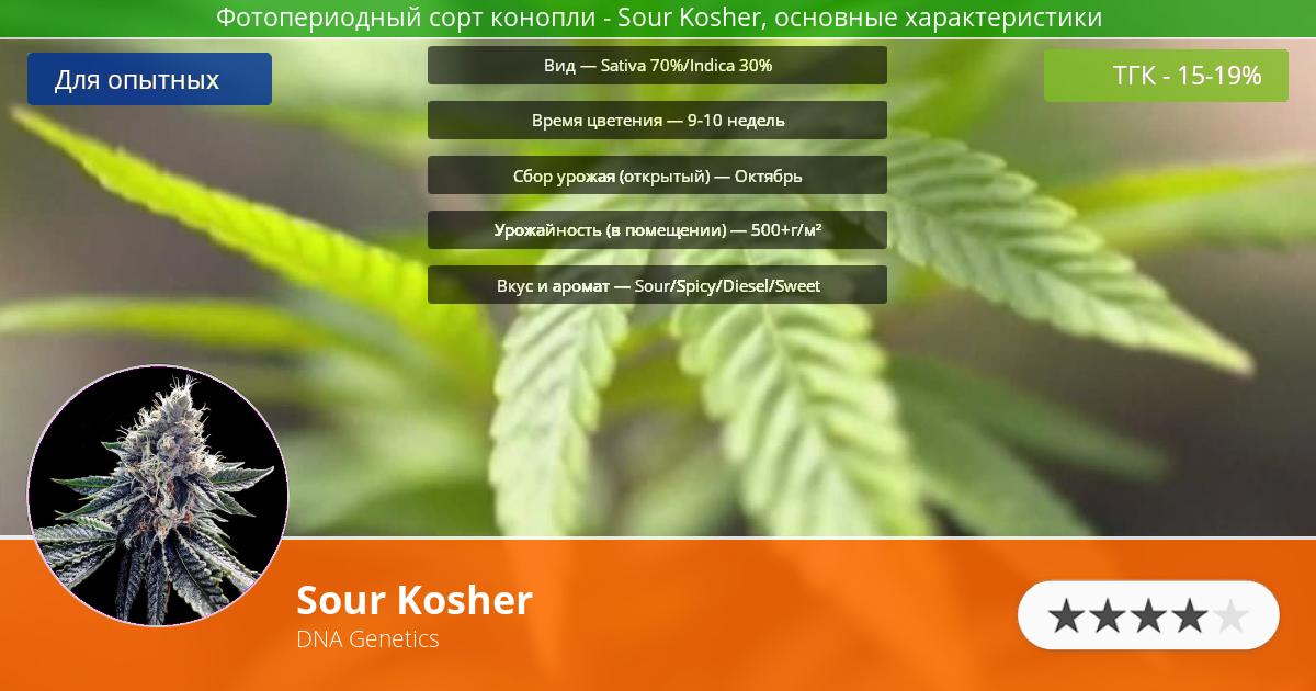Инфограмма сорта марихуаны Sour Kosher