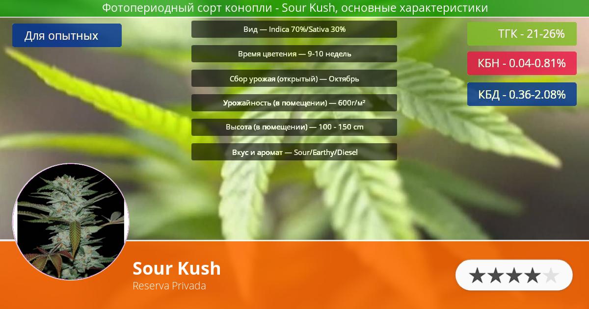 Инфограмма сорта марихуаны Sour Kush