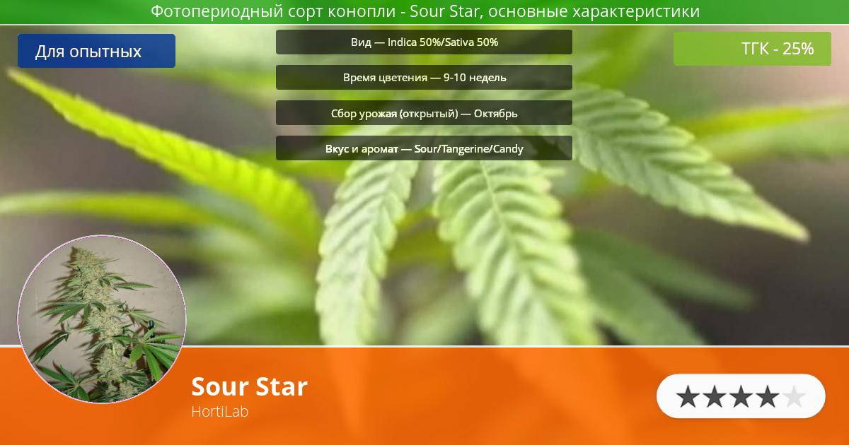 Инфограмма сорта марихуаны Sour Star