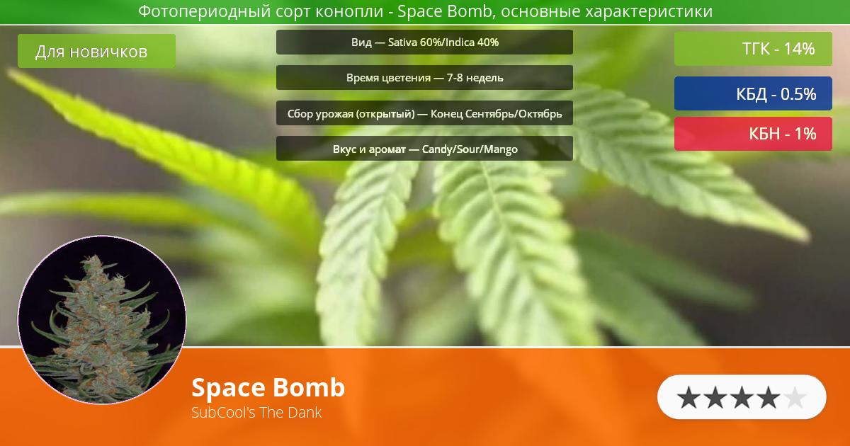 Инфограмма сорта марихуаны Space Bomb