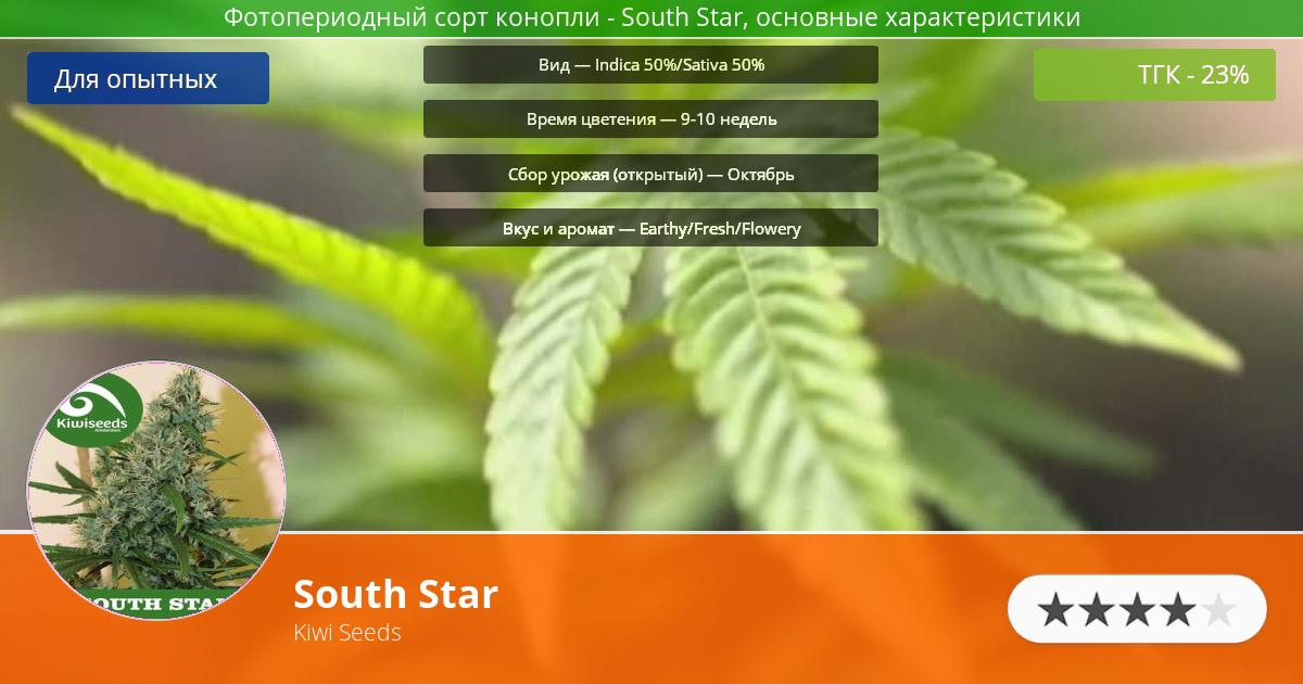Инфограмма сорта марихуаны South Star