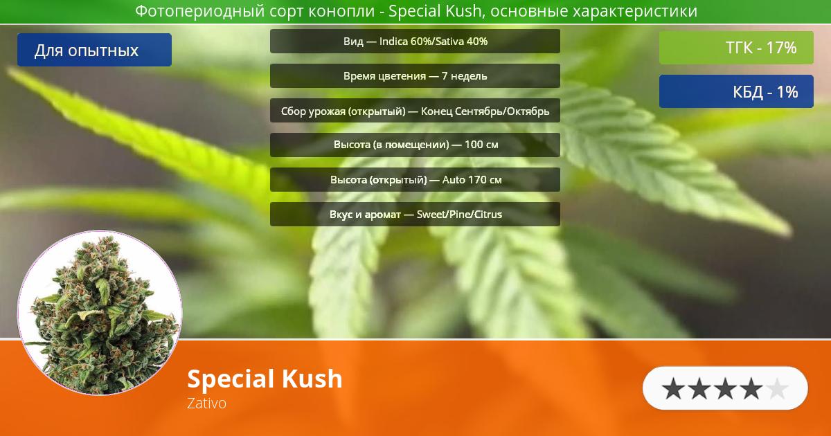 Инфограмма сорта Special Kush